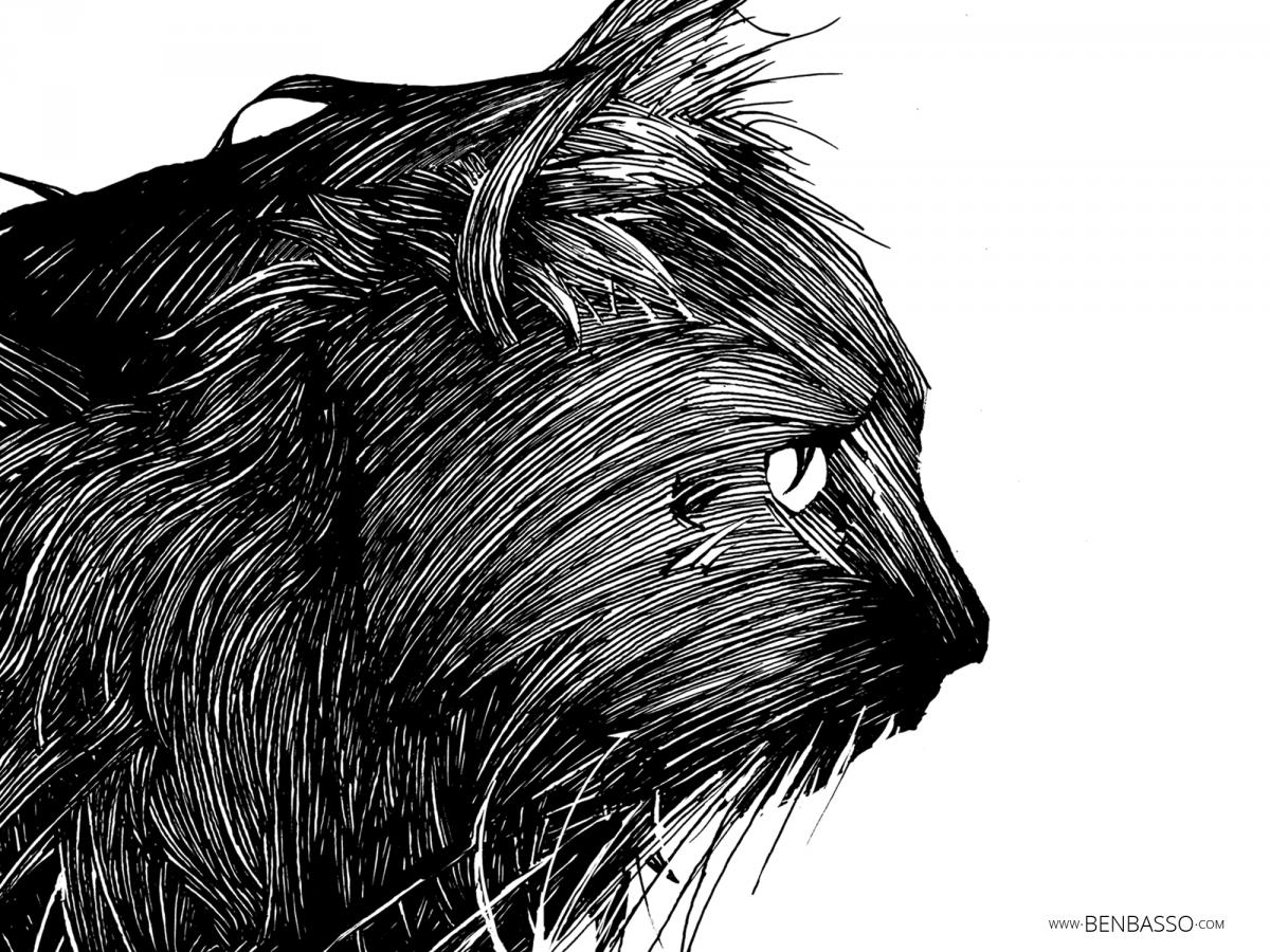 Tête de chat tirée de l'artbook de Ben Basso. Une sacrée campagne de crowdfunding entre Ben Basso et Ulule !
